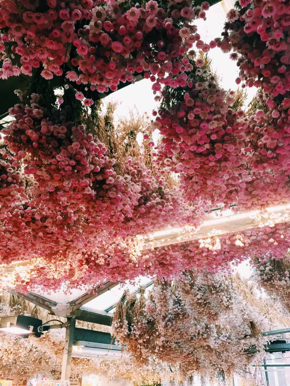 The pink ceiling of Amsterdam's floating flower market on a morning of exploration. The cheapest hotel for an instagram- and eco-friendly stay in Amsterdam: Ecomama Hotel Amsterdam is cozy, sustainable and made my time in Amsterdam special.