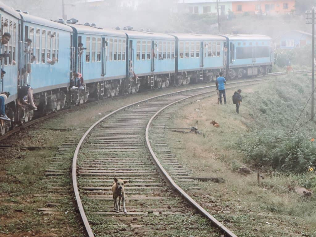 Dog on train tracks in Sri Lanka.
