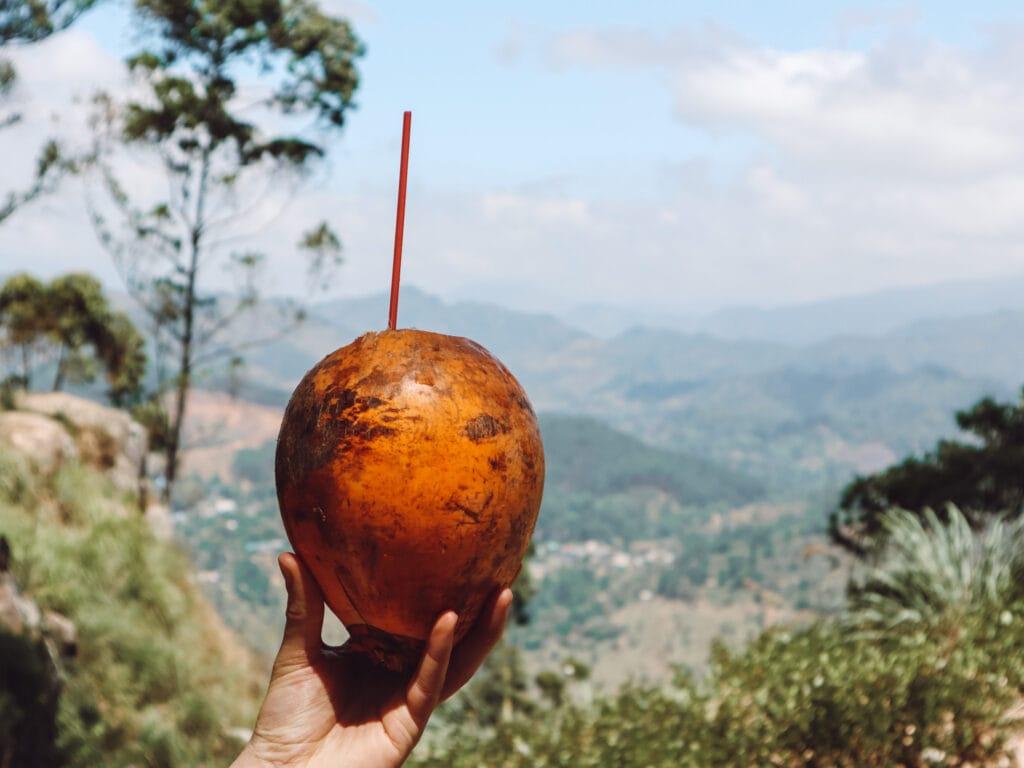 coconut in ella sri lanka