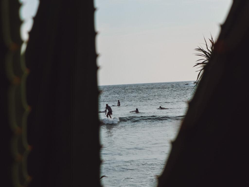 surfers viewed between aloe leaves in Hiriketiya Sri Lanka