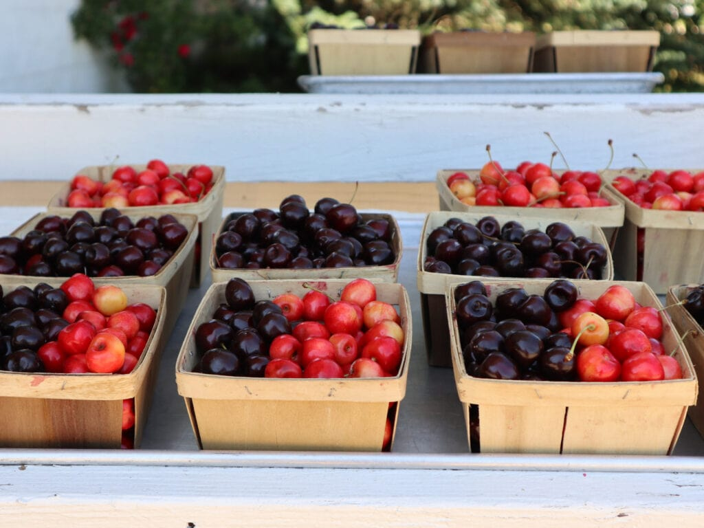 cherries at cherry point farm market in michigan