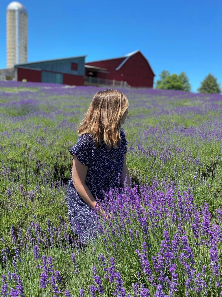 Lavender Hill Farm in northern Michigan